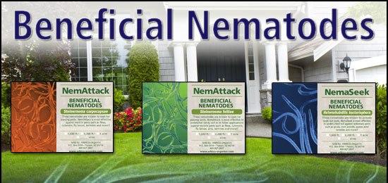 ARBICO's Beneficial Nematodes