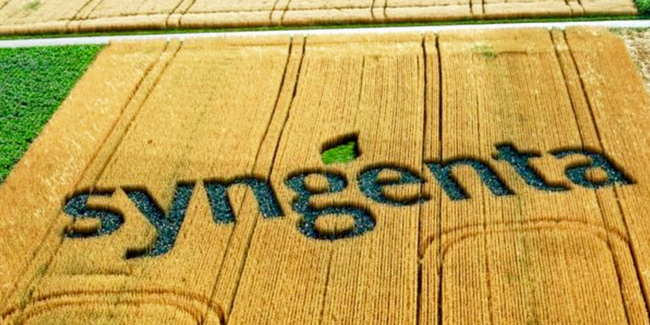 Syngenta releases new corn hybrids and unveils new naming system